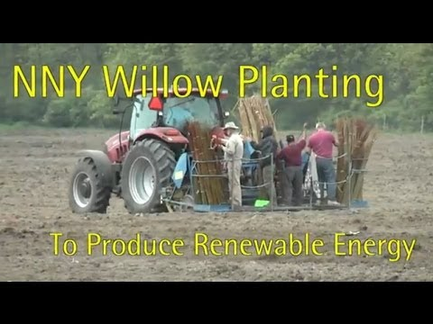 Growing Willow in Northern New York for Renewable Energy