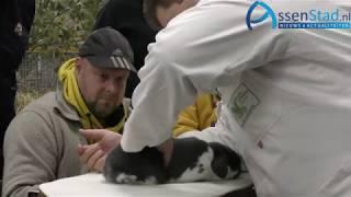 26 e kleindierenshow Midden Drenthe