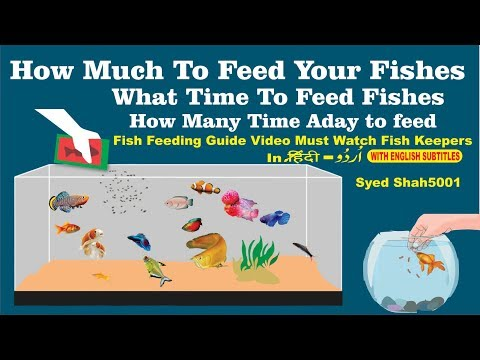 How Much To Feed Your Fish? #How To Feed And What To Feed Your Fish
