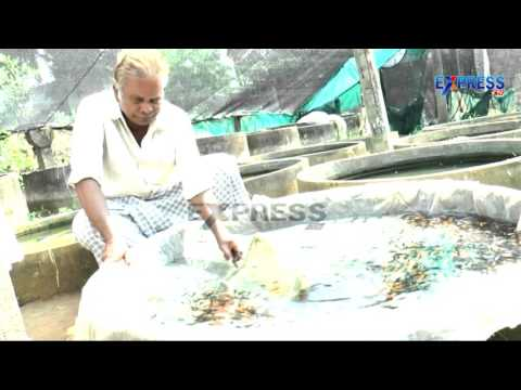 Success story of Ornamental fish and Love birds by Sai Babu,