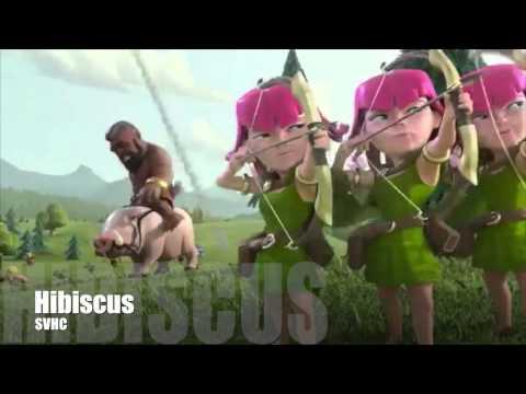 HIBISCUS Svhc - Video presentazione