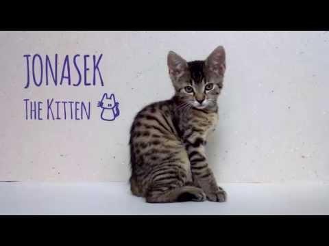 Cute playful kitten: Introducing Jonasek
