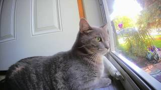 12 Hours of Cats with Birdsong for Cats to Watch