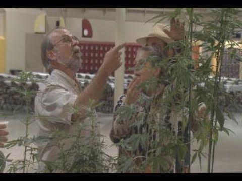 Interest in industrial hemp is growing