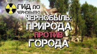 Чернобыль природа против города!(https://chernobylguide.com/ru/panoramy_chernobylya.html К сожалению, большая часть людей в нынешнем обществе припоминают о ужасных..., 2016-12-06T18:03:37.000Z)
