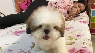 Meet WORLDs CUTEST DOG | Ss Vlogs :-)