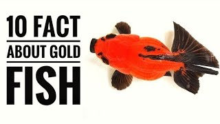 10 facts about gold fish