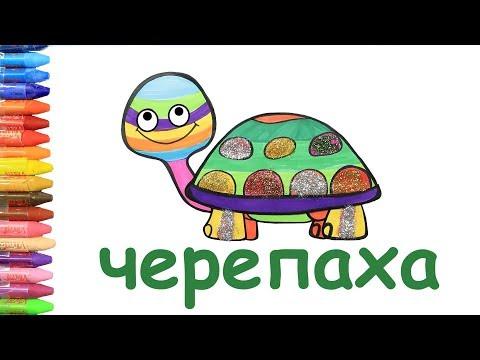 Как рисовать и цвет черепаха   учить цвета   учить животные   учить русский и английский