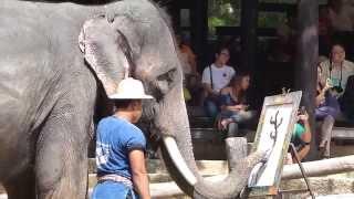 AMAZING ELEPHANT PAINTING, CHIANG MAI, THAILAND..TRAVEL, ADVENTURE...