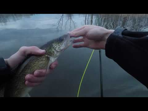 Fly Fishing For Walleye