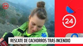 Emotivo rescate de cachorros tras incendio en Valparaíso