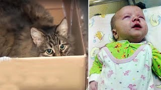 Baby Left In Freezing Cold To Die, Cat Climbs Into Tiny Box, Starts Meowing For Help