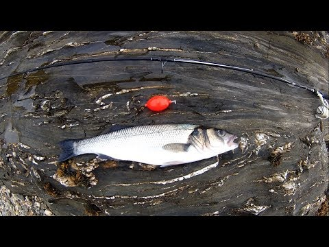Shore Fishing - An Awesome Way To Fish For Sea Bass - Bubble Float - Shrimp/Prawn