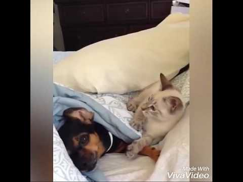 The cat was playing with the dog