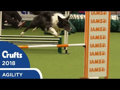 Agility - Crufts Singles Heat S/M/L (Jumping) Part 2 | Crufts 2018