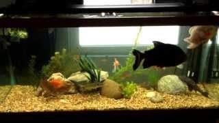 My 180 Gallon Fish Tank Plans