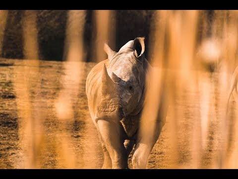 WTTC- Industrial-Scale Illegal Poaching Threatens Tourism (PART MUTE)