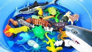 Learn Colors With Wild Animals Sea Animals Names in Blue Water Tub Shark Toys For Kids