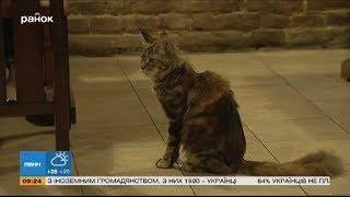 видео во Львове необычное заведение