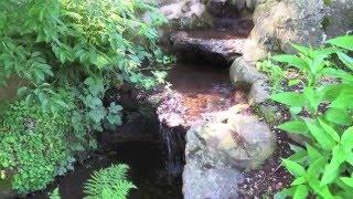 "Celtic harp and mandolin ""The Sunken Garden"" (Improvisation)"