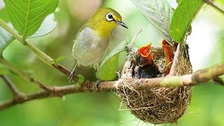 #3794. Гнезда птиц (В мире животных)