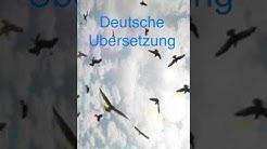Sia - Bird Set Free - Deutsche Übersetzung