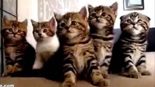 ТАНЦУЮЩИЙ КОТ И ЕГО ГРУППА КОШКИ -  Это Видео Заставит Вас Смеяться!!! 2016