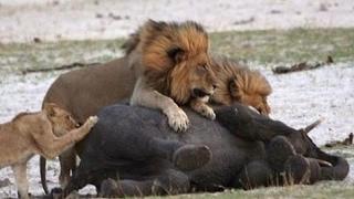 夜の影に象にライオン狩り 夜の影に象にライオン狩り 夜の影に象にライ...