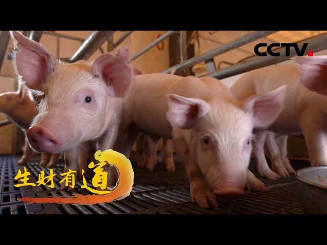 湖南长沙县:养猪还能生态好?来看看车马村怎么做 「生财有道」20210728 | CCTV财经
