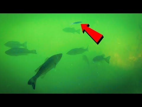 Underwater Fluke Fishing with NEW Rigging Tricks For Deeper Water!