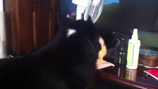 Kitty gets his ears cleaned