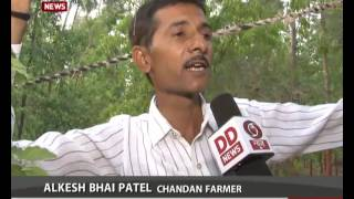 Farmer in Gujarat plants chandan trees
