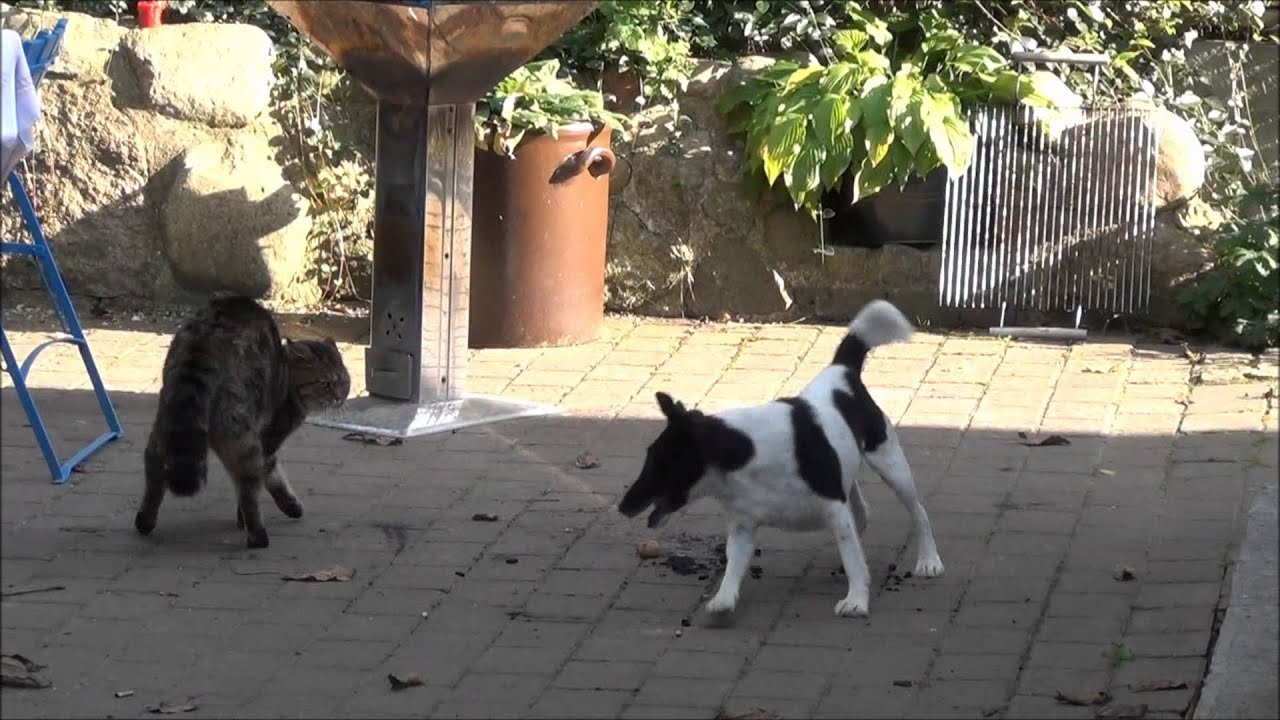 Hund Vs Katze Dog Vs Cat Youtube