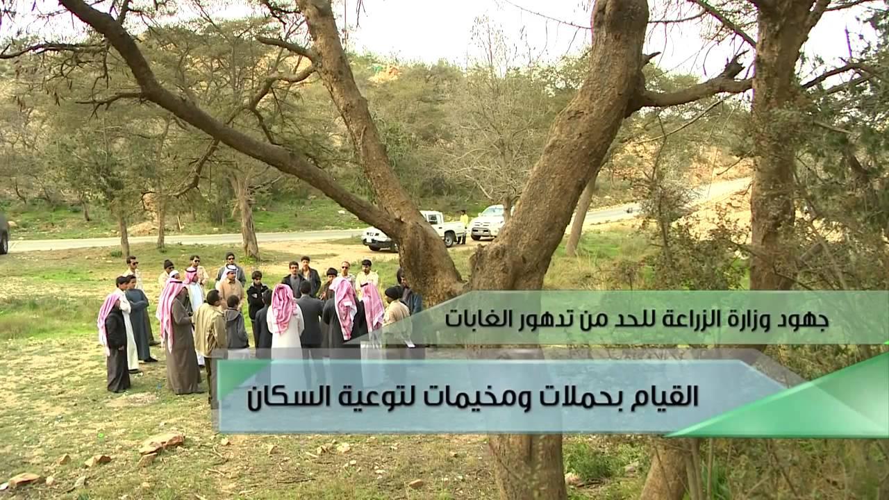 فيلم وثائقي عن الغابات في المملكة العربية السعودية Youtube
