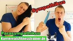 Nervensysteme, Sympathikus & Parasympathikus einfach erklärt! B-Lizenz Prüfungsstoff