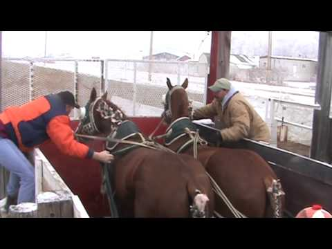 Young Gunz Chariot Racing Video #1