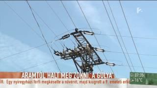 Zokni, a gólya halála miatt madárbiztossá tennék az elavult villanyoszlopokat - tv2.hu/mokka