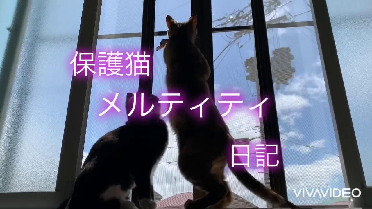 保護猫メルティティ日記