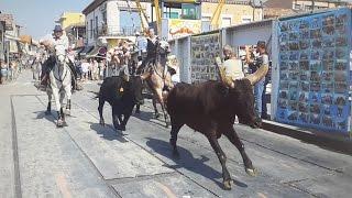 GRAU DU ROI-Abrivado 4 manades-Pont Tournant-2016/09/13