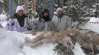 Отзыв охотников (охота на волка 2019г)
