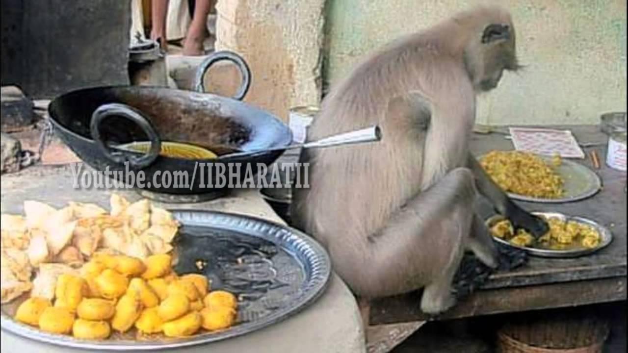 Street Food Monkey As Cook Youtube