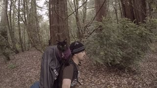 Cat camping in Redwood National Park