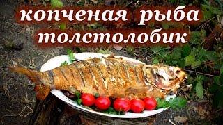 """Рецепт копчения рыбы, """"Толстолобик"""""""