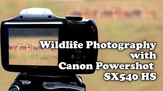 Canon Powershot SX540 HS for Wildlife Photography. Over 50 Photos and Couple of Videos