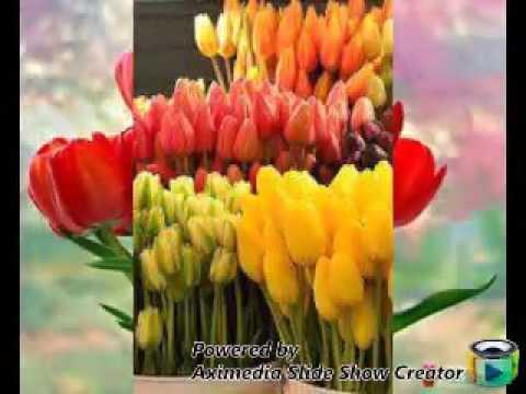 Женщине нужно дарить такие цветы