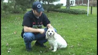 Alli Cocker Spaniel Tricks ... My Wonderful Sweetheart Doggie Performing Her Traveling Circus!!