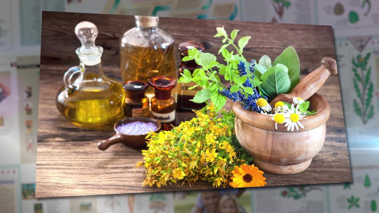 Encyclopédie des plantes médicinales - YouTube