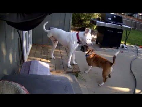 Sick dog gets cheer up treatment