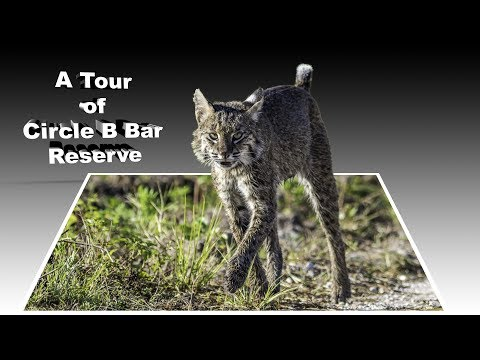A Tour of Circle B Bar Reserve
