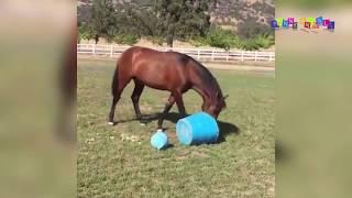 Приколы с животными. Угарные кони.